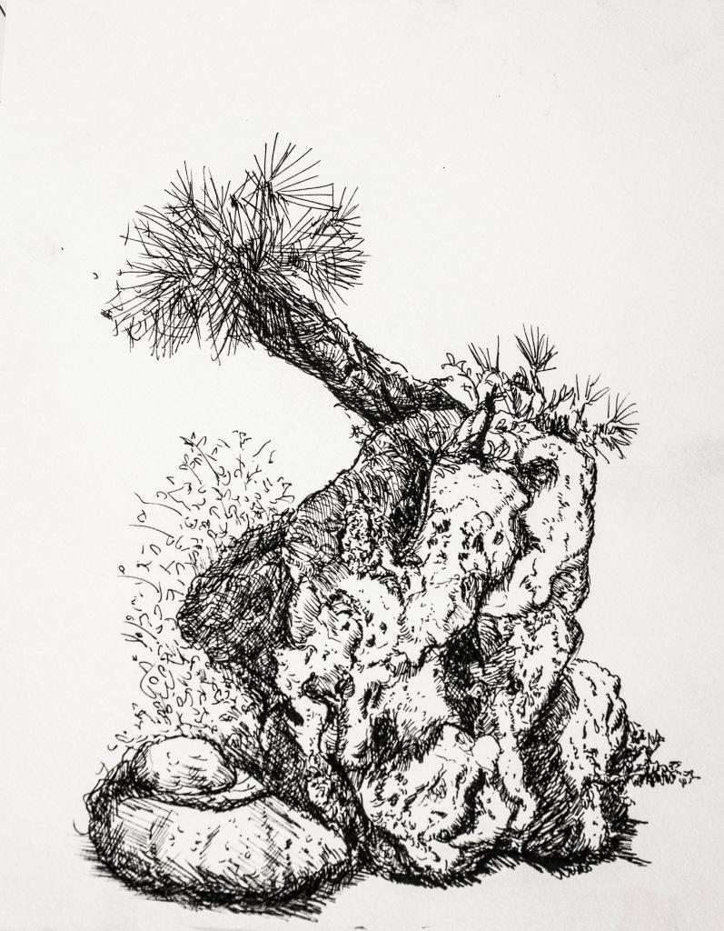 Garden rock in Beppu 9in x 12in ink pen on paper